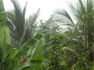 pluie_jardin