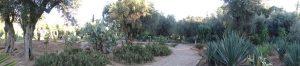 Oliviers, cactus, aloe vera, agave, orangers, palmiers