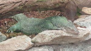 parc zoologique de Peaugres